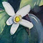 blossom detail
