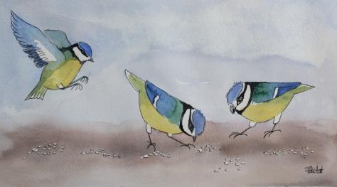 birdsfeedingfeat